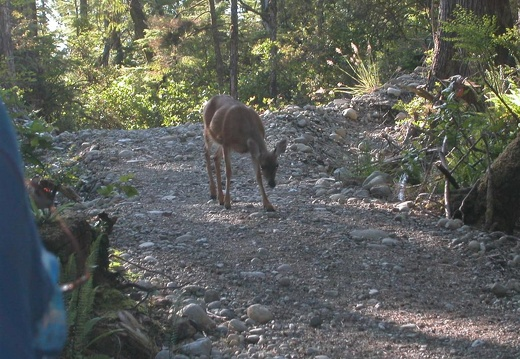 Mandatory wildlife on our nature walk in Ucluelet