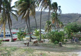 Looking out at the harbor in Bequia
