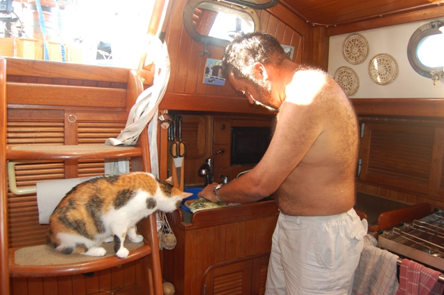 Maya the fishercat